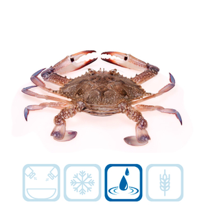 Crab - Kuwaiti