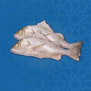Nagroor Offer - Iranian