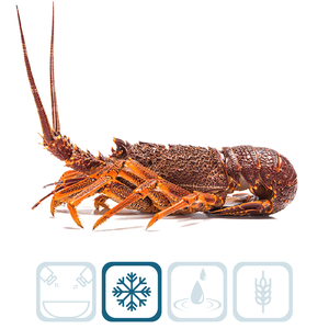 Rock Lobster Whole - Large