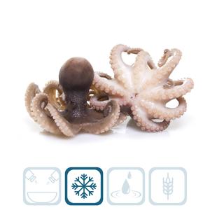 Baby Octopus - 30/40