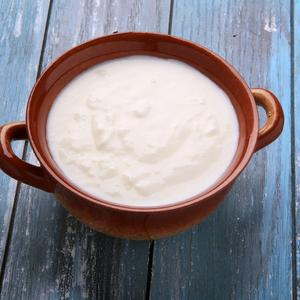Cow kefir Yogurt